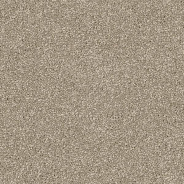 First View Trevors Carpets